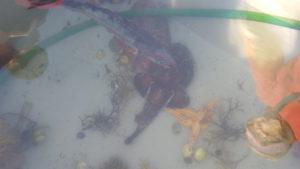Saltvannsakvarium med sjøpumpe holdt liv i fisken mens de ble studert og kost med